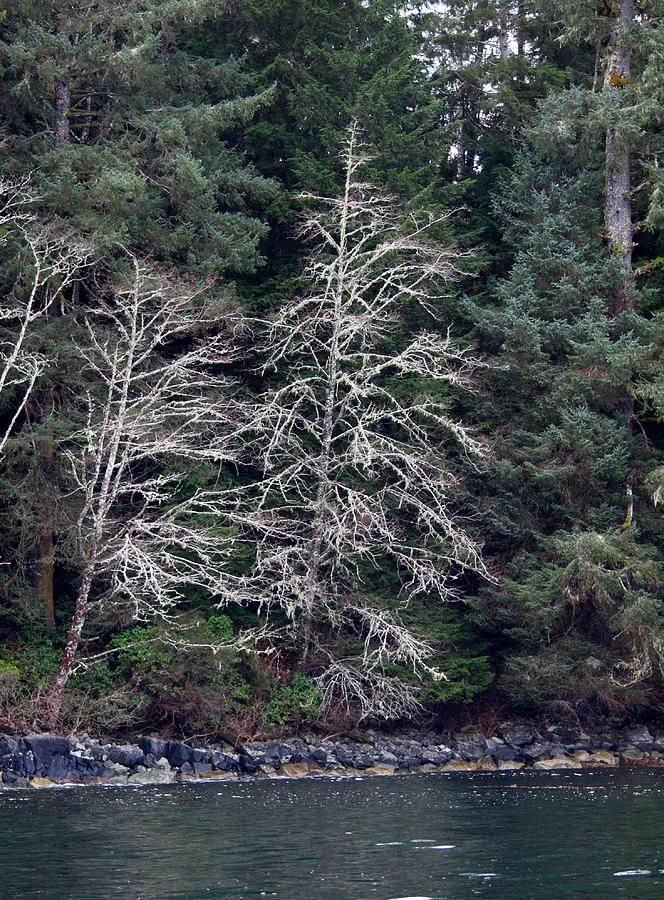 Fishing Photograph - Mossy Trees by Jim Moore