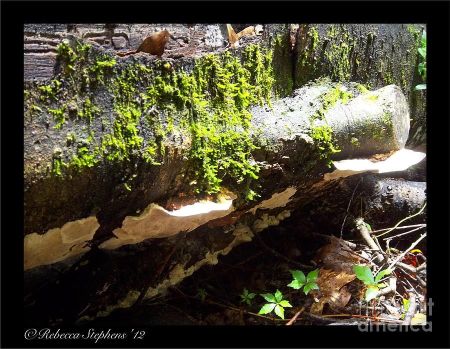 Mushroom Photograph - Mossy Waterfall On Mushroom Rock by Rebecca Stephens