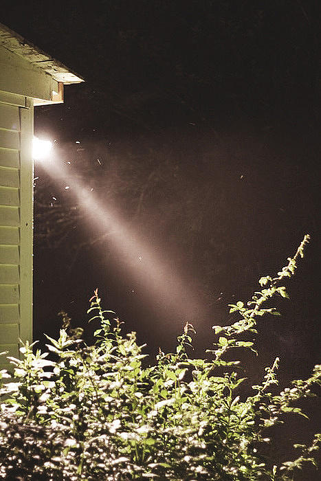 Moth Light Central Photograph by Joey Huertas
