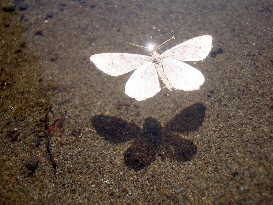 Floating White Moth Shadow - Floating Silhouette Photograph