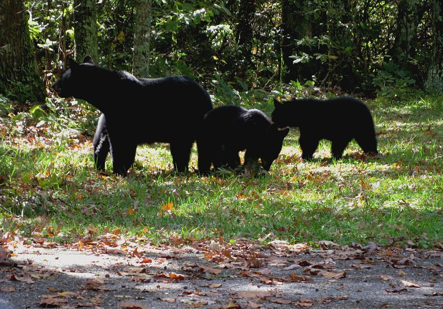 Kathy Long Photograph - Mother Bear And Three Cubs by Kathy Long