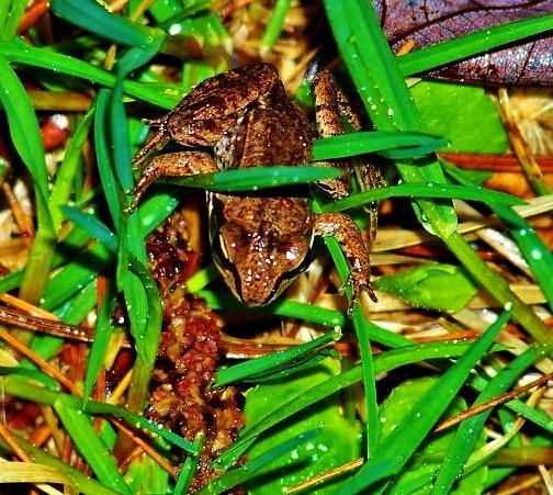 Frog Photograph - Mother Frog by Virginia Lei Jimenez