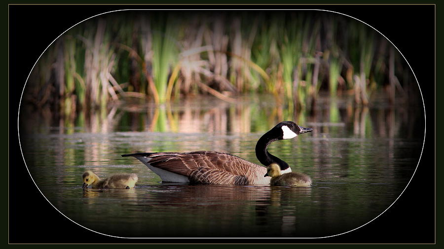 Mother Goose Photograph - Mother Goose by Travis Truelove