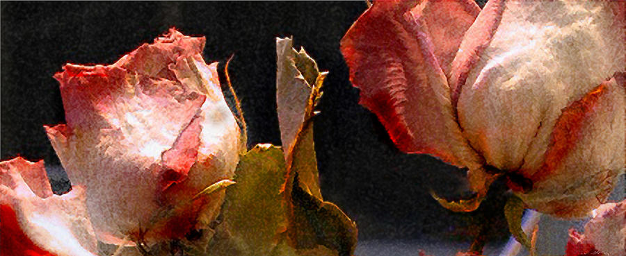 Mother's Roses by Marilyn Marchant
