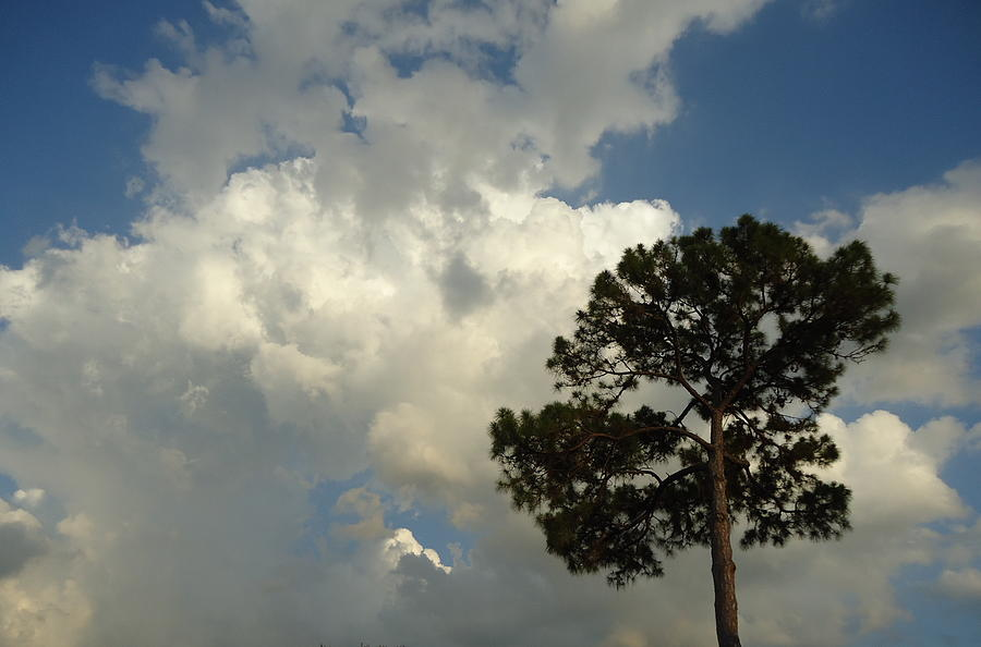 Mottled Painting - Mottled Clouds And Scrub Pine by Debbie Wassmann