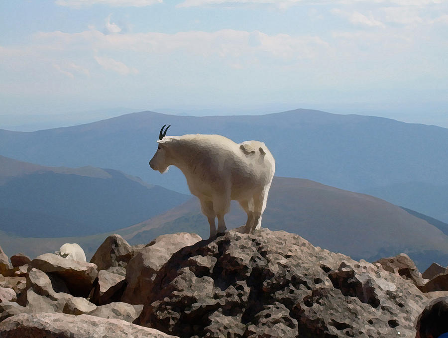 Abstract Digital Art - Mount Evans Goat 1 by Bill Kennedy
