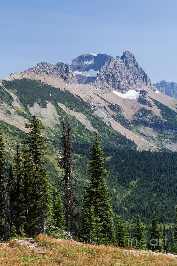 Mount Gould and Subalpine Fir by Katie LaSalle-Lowery