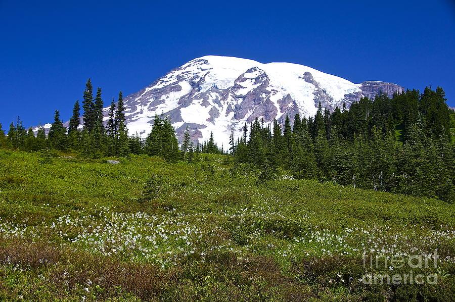 Sean Griffin Photograph - Mount Rainier In Summer by Sean Griffin