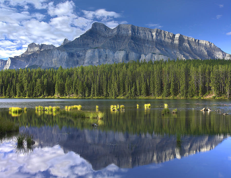 Mount Rundle And Boreal Forest Photograph By Tim Fitzharris