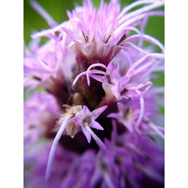 Phoenicia Photograph - Mountain Flower by Natasha Marco