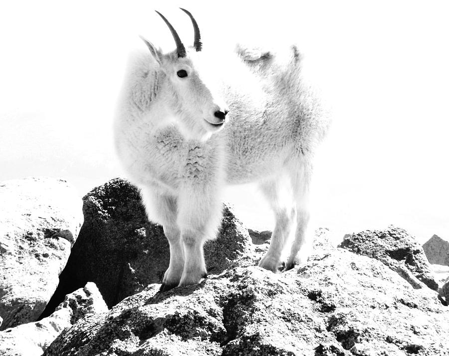 Abstract Digital Art - Mountain Goat White Out by Bill Kennedy