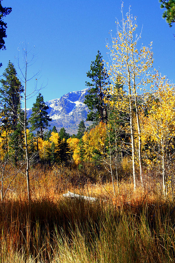 Aken In The Autumn Of 2009. A Colorful Mountain Meadow In The El Dorado National Forest In The Lake Tahoe Basin Of Northern California. Mount Tallac Photograph - Mountain Meadow by Lynn Bawden