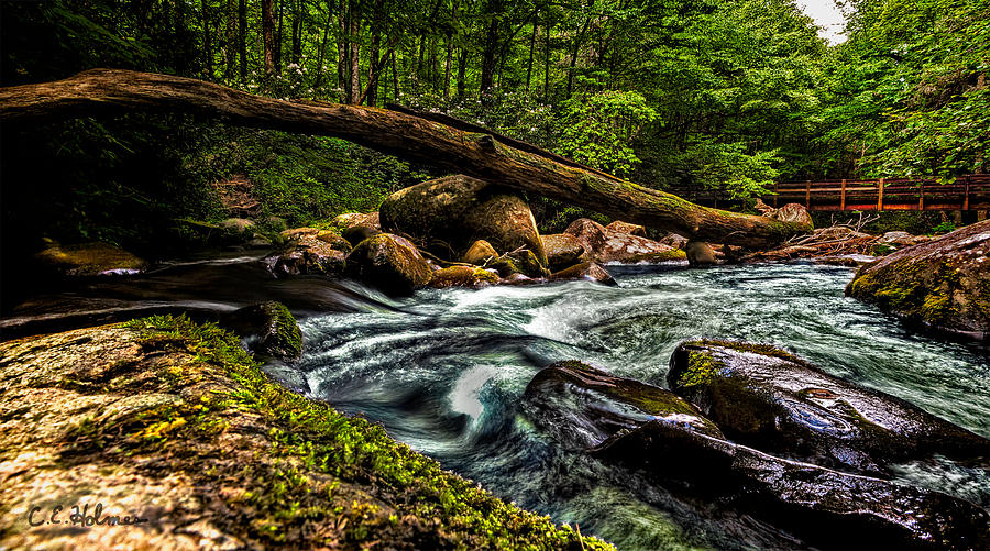 Moss Photograph - Mountain Stream Iv by Christopher Holmes
