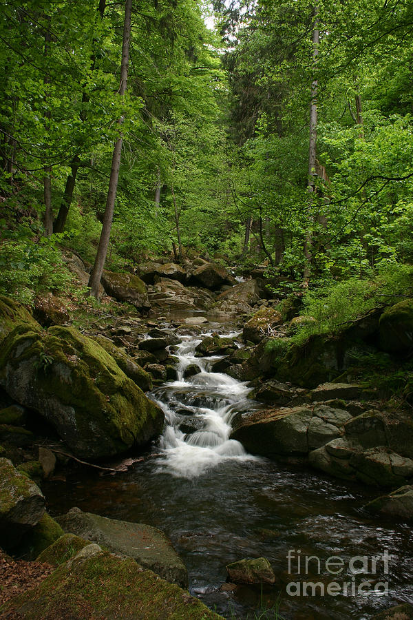 Brook Photograph - Mountain Stream by Torsten Dietrich