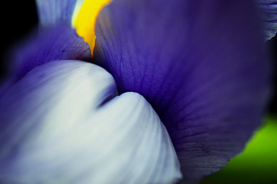 Flower Photograph - Moves In Curves by Melanie Moraga