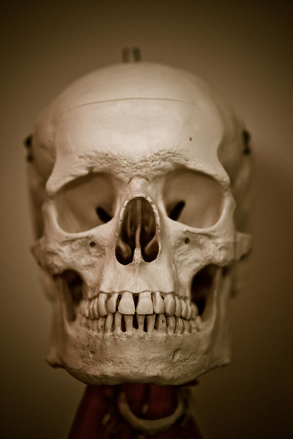 Skull Photograph - Mr Smiley by Edward Myers
