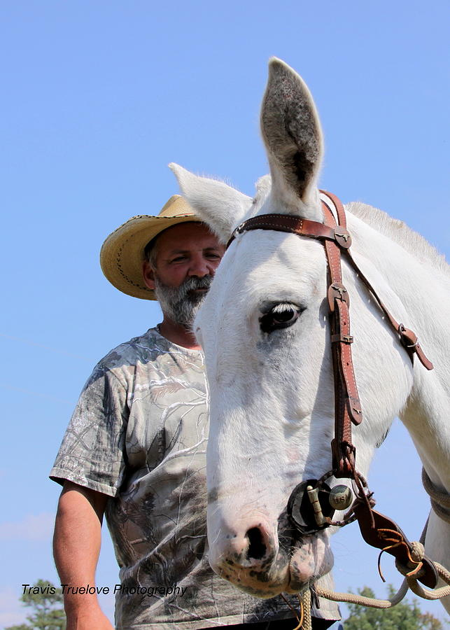 Horses Photograph - Mules At Benson Mule Day by Travis Truelove