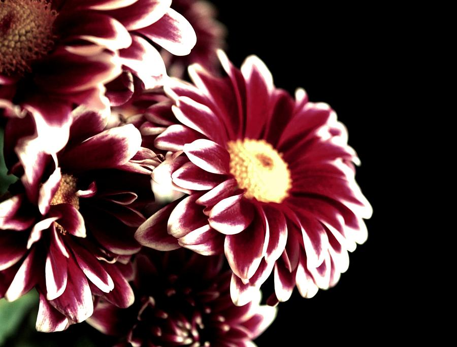 Mums Photograph - Mums In A Vase by Cathie Tyler