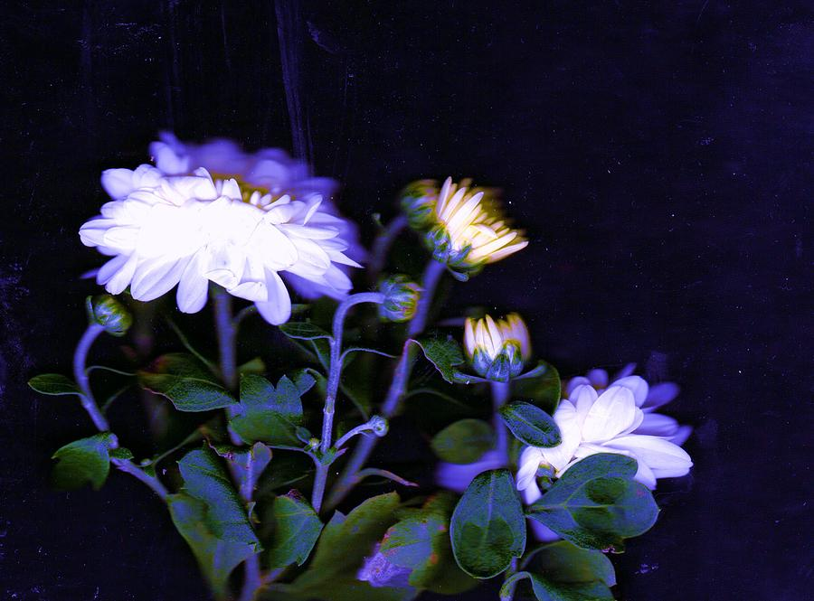 White Photograph - Mums The Word by Anne-Elizabeth Whiteway