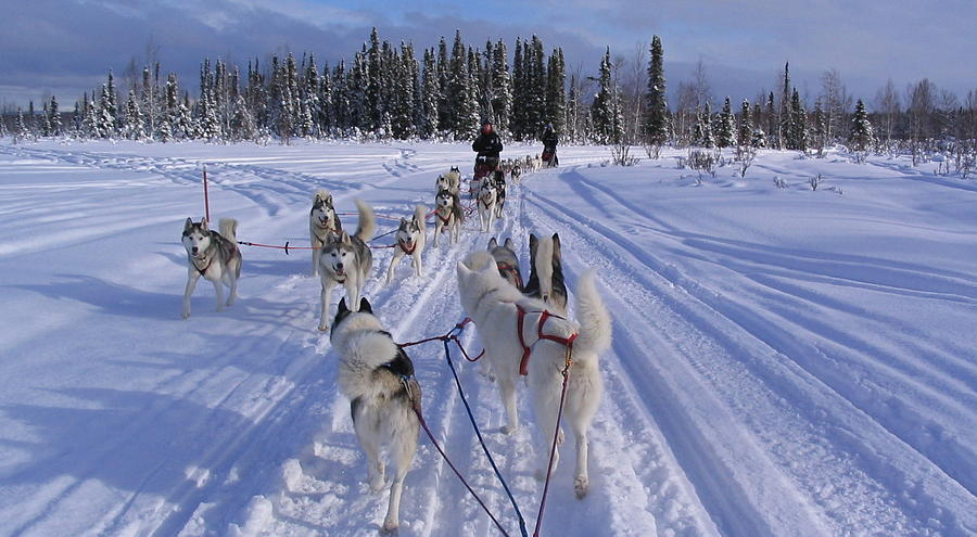 Mushing Photograph - Mush Hour by Donna Quante