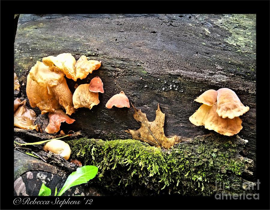 Mushroom Photograph - Mushy Chicks by Rebecca Stephens