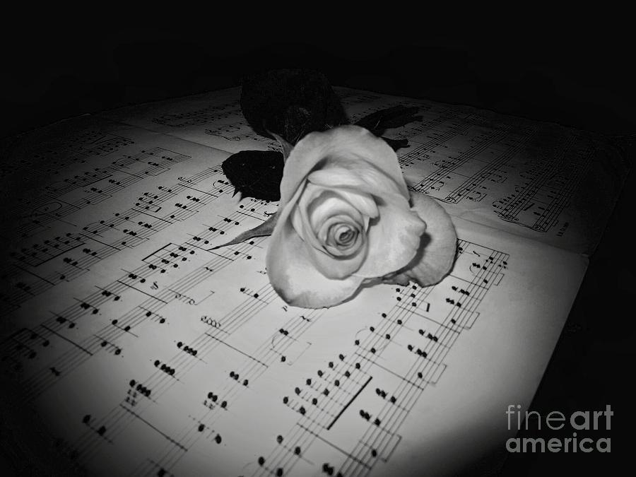 Music photograph music rose in black and white by joyce kimble smith