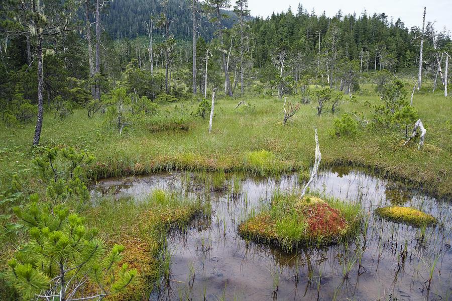 Muskeg Bog With Ponds Mitkof Island Photograph By Konrad