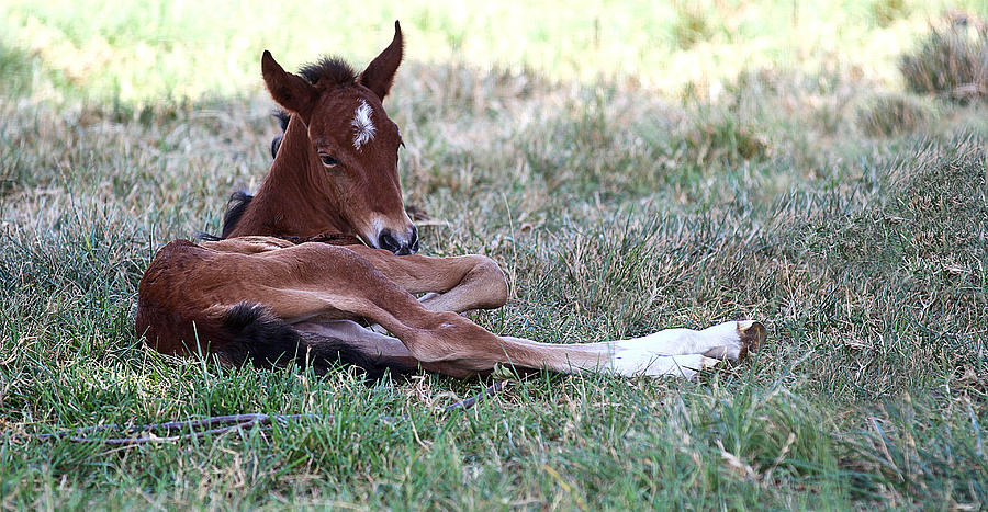 Horse Photograph - Mustang Filly by Elizabeth Hart