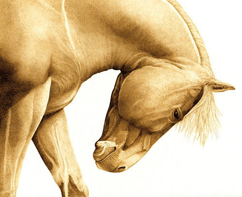 Horse Drawing - Mustang Sally by Cate McCauley