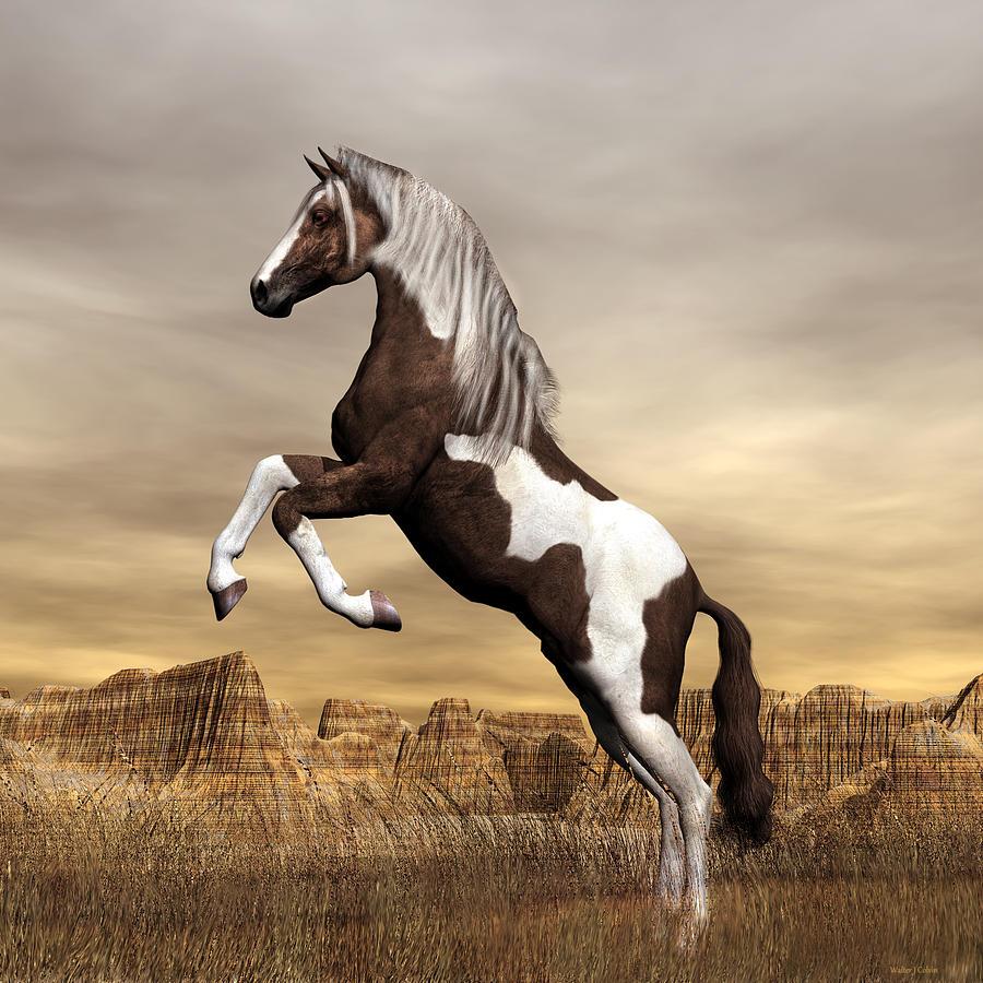 wild black mustang horses