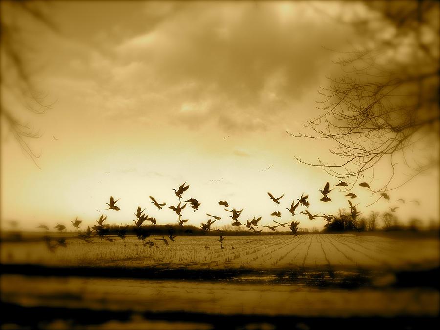 Landscape Photograph - My Back Yard by Arthur Barnes