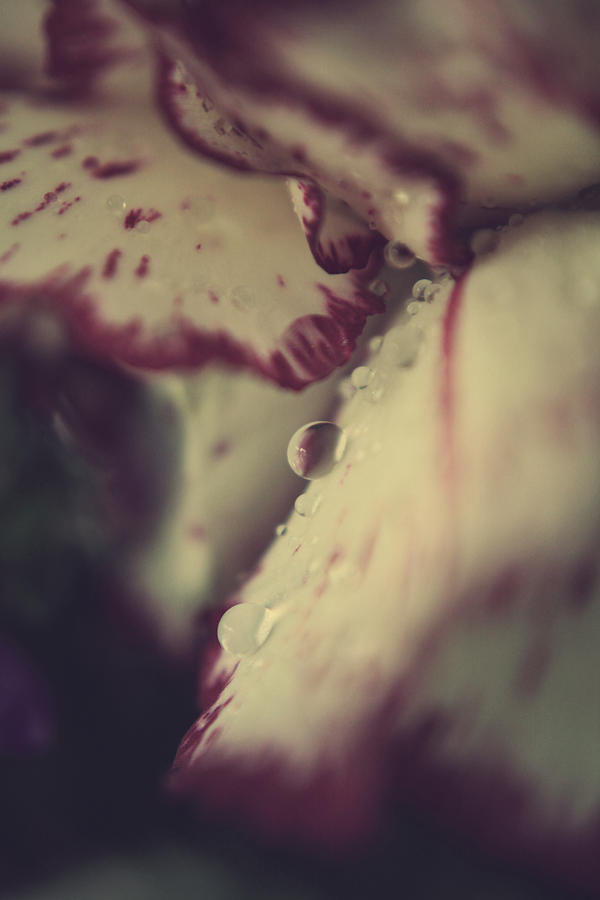Flowers Photograph - My Blood And Tears by Laurie Search