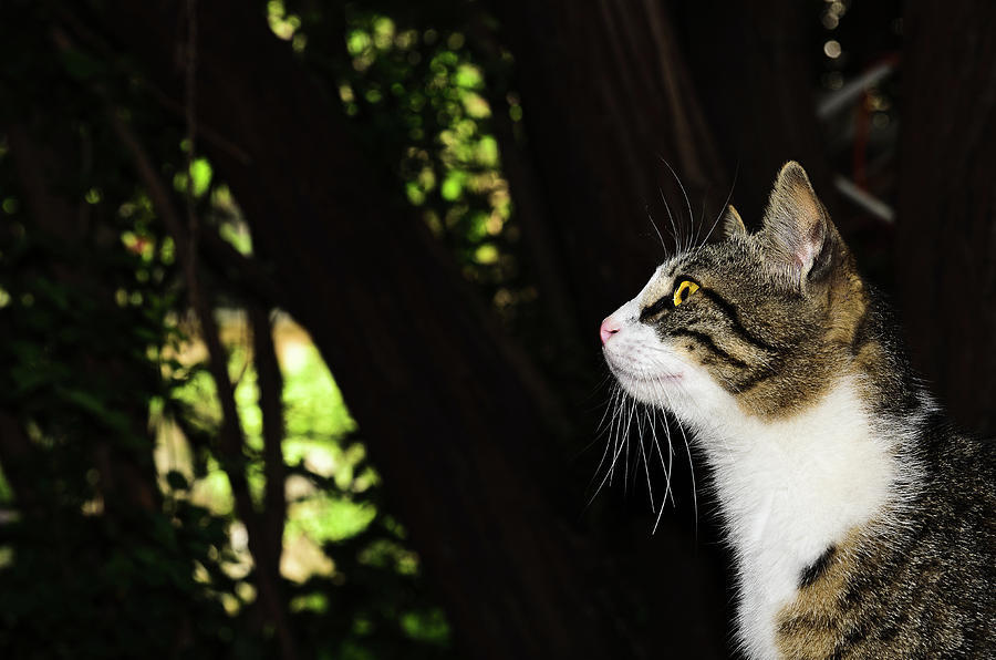 Animal Photograph - My favorite cat. by Michael Goyberg