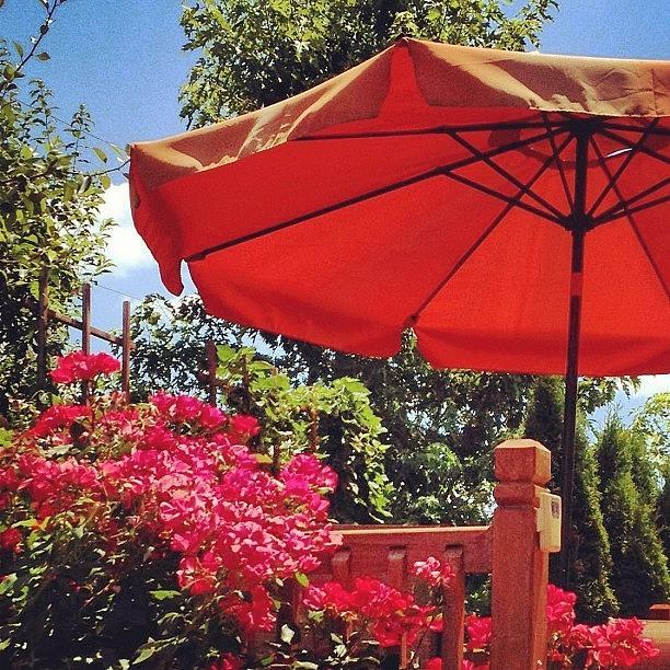 Summer Photograph - My #flowers #garden #summer #webstagram by Irina Moskalev