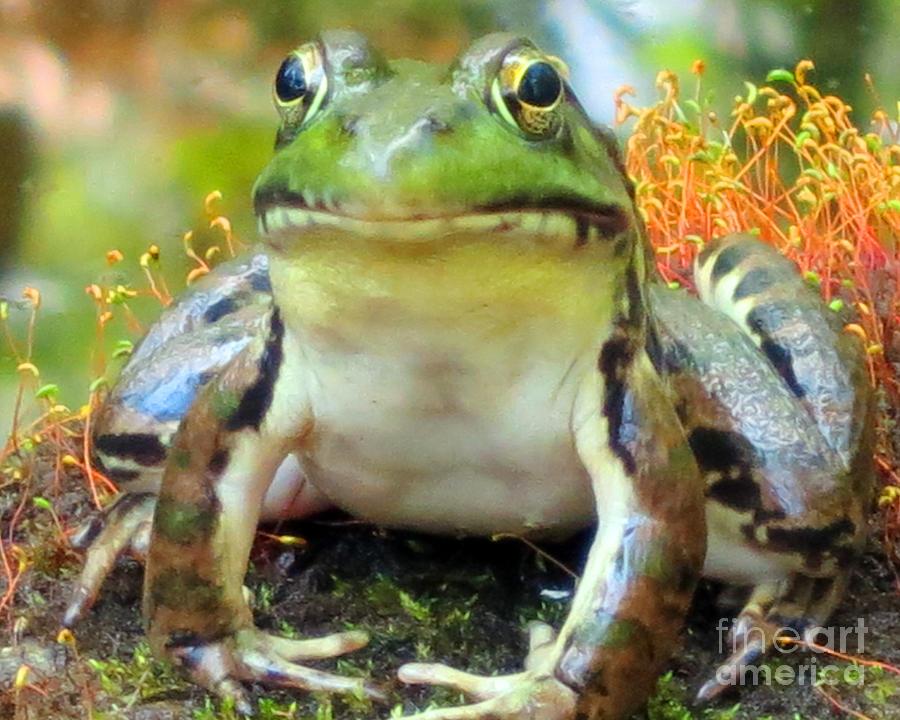 Frog Photograph - My Frog Friend by Patricia Januszkiewicz