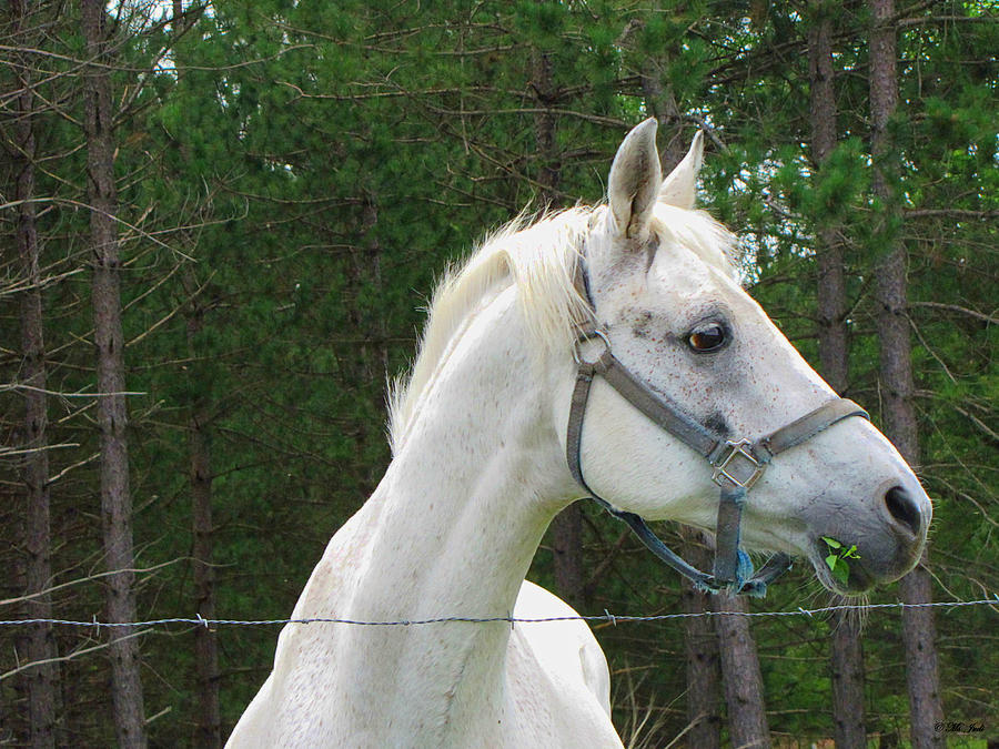 Horse Photograph - My Good Side by Ms Judi