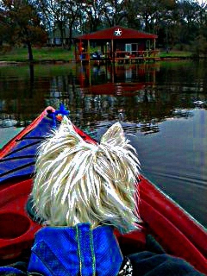 Westie Digital Art - My Kayaker Buddie by Carrie OBrien Sibley