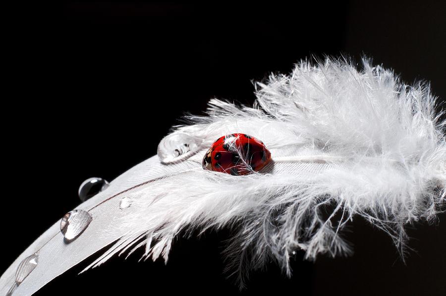 Asian Photograph - My Ladybug by Ivan Vukelic