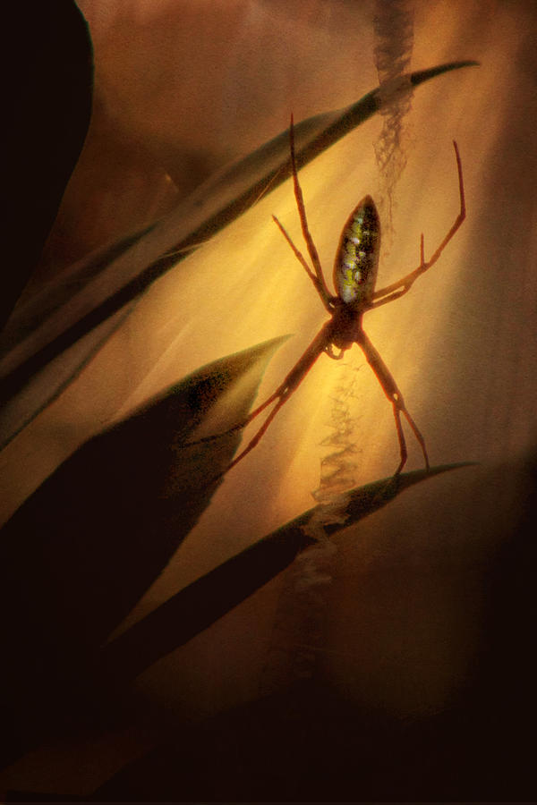 Spider Photograph - My Parlour by Amy Tyler