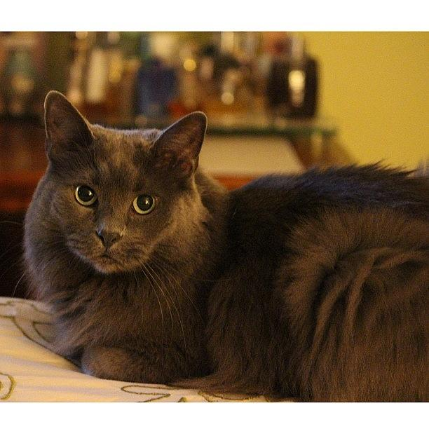 Animal Photograph - My Patient Subject. #canon #t4i #cat by Elza Hayen