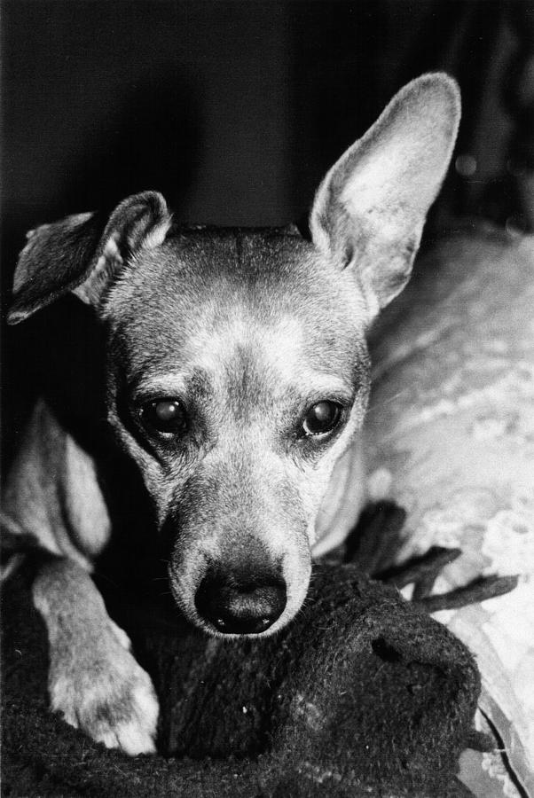 Dog Photograph - My Sweet Angel by Alessandro Della Pietra