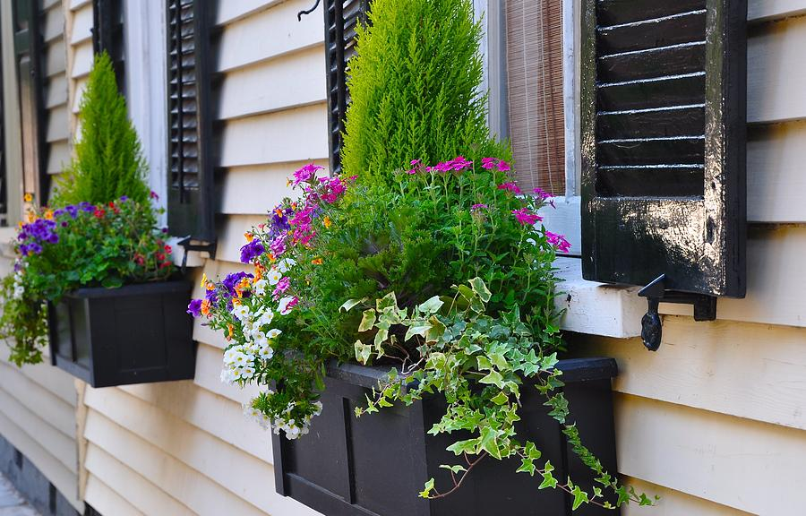 Flower Box Photograph - My Tradd Street Window Boxes by Lori Kesten