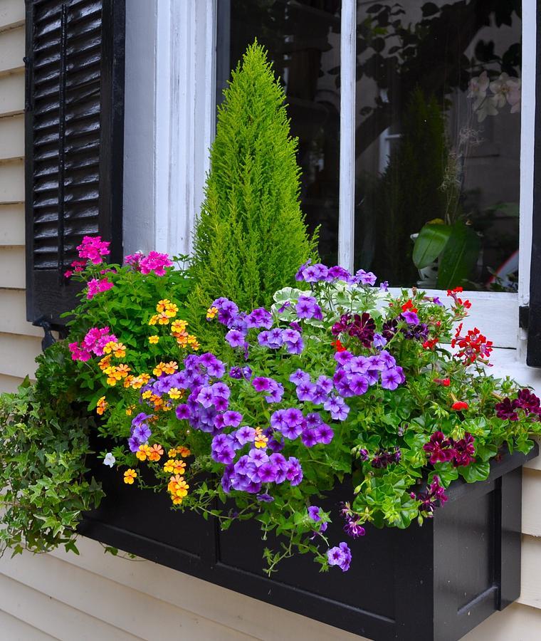 My Window Boxes Late May Photograph by Lori Kesten