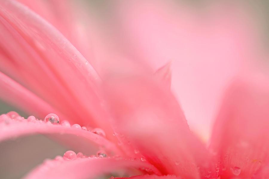 Flower Photograph - My Wish... by Melanie Moraga