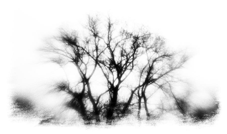 Tree Photograph - Mysterious Trees by David Ridley