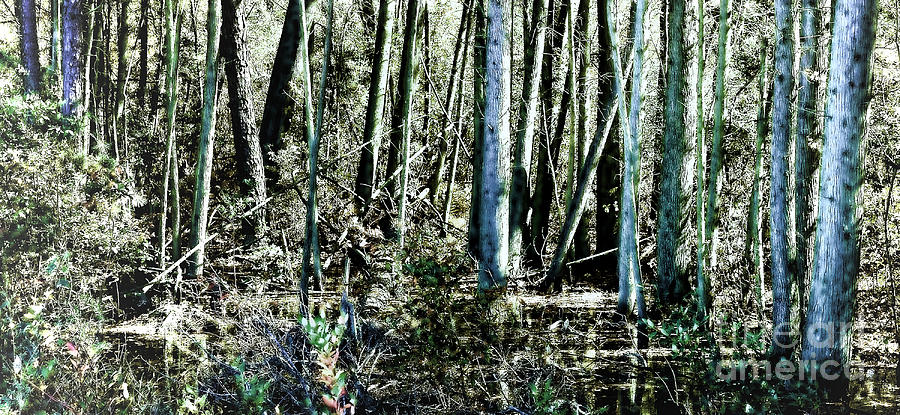 Mystery Photograph - Mystery Forest by Olivier Le Queinec