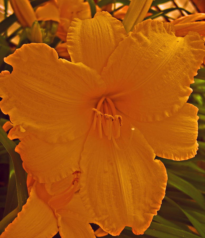 Flower Photograph - Mystic Yellow Lily by Michelle Cruz
