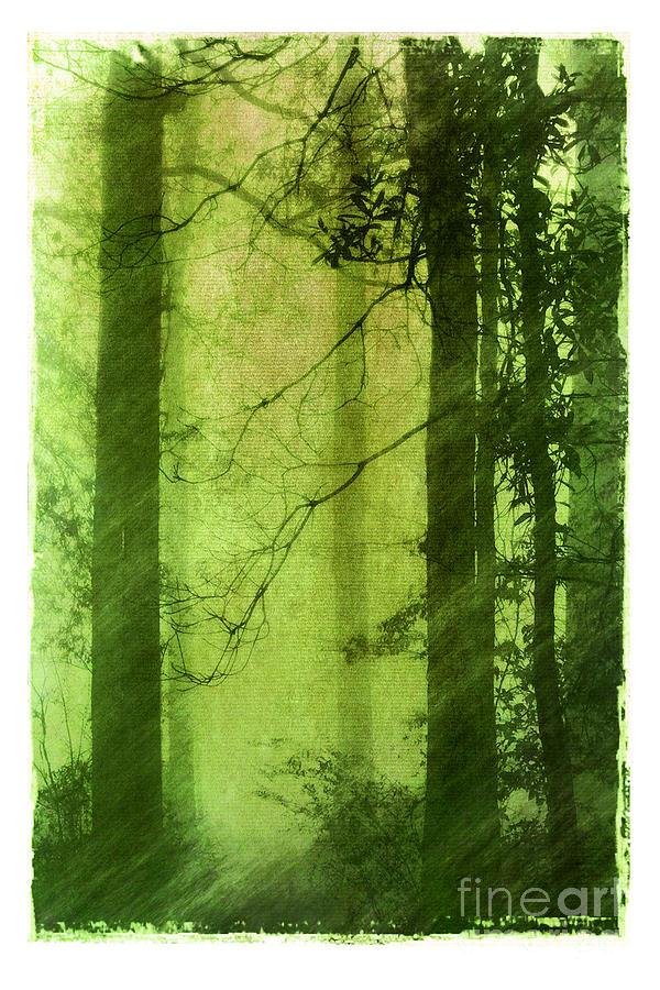 Green Photograph - Mystical Glade by Judi Bagwell