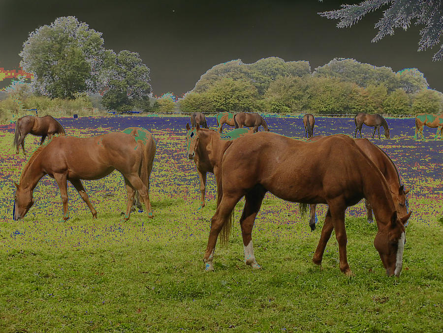 Horses Photograph - Mystical Horses by Fred Whalley