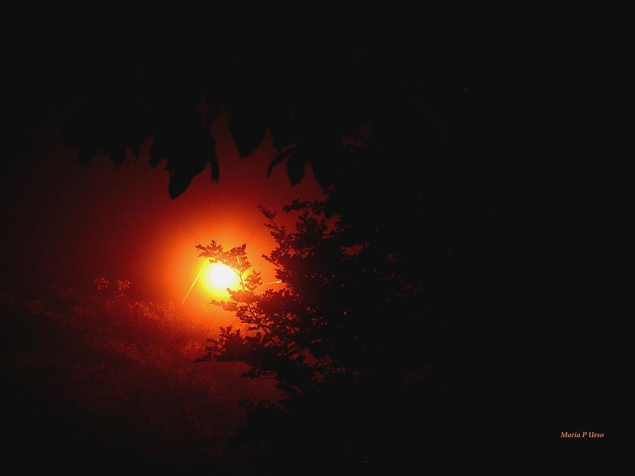 Mystifying Photograph - Mystifying by Maria Urso